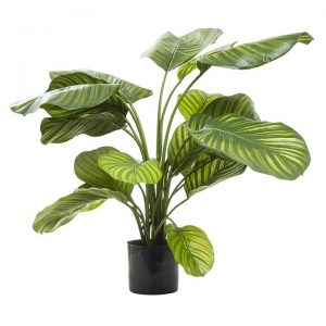 Artificial Calathea Fasciata, Green